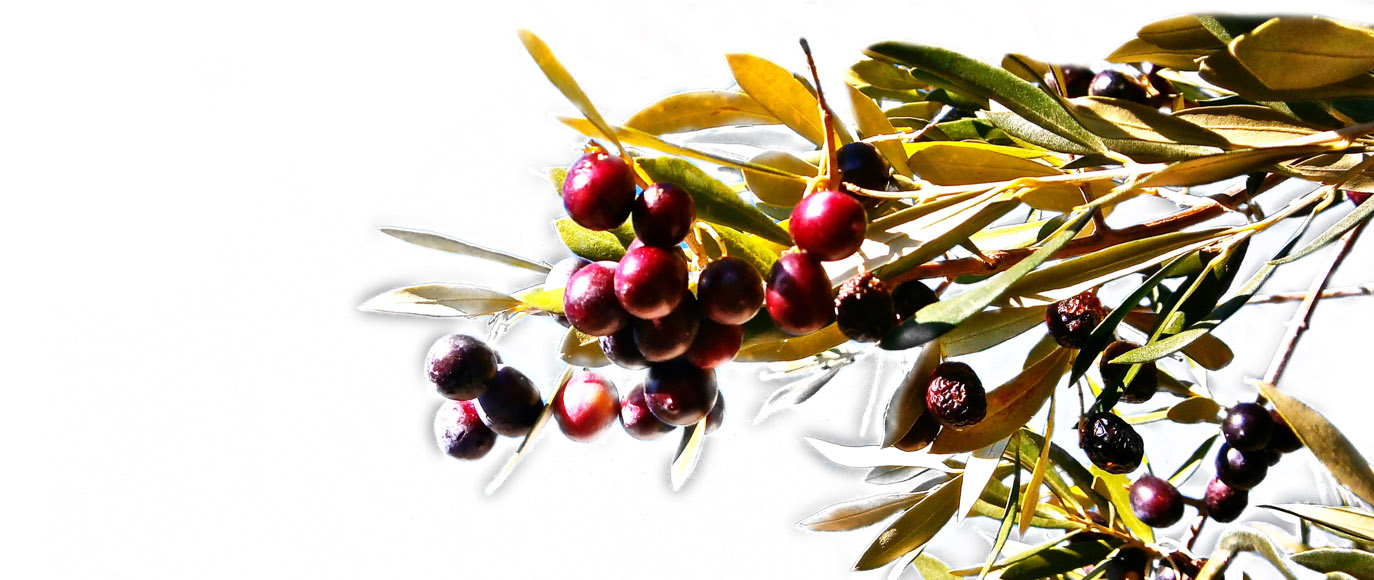 Olives de table